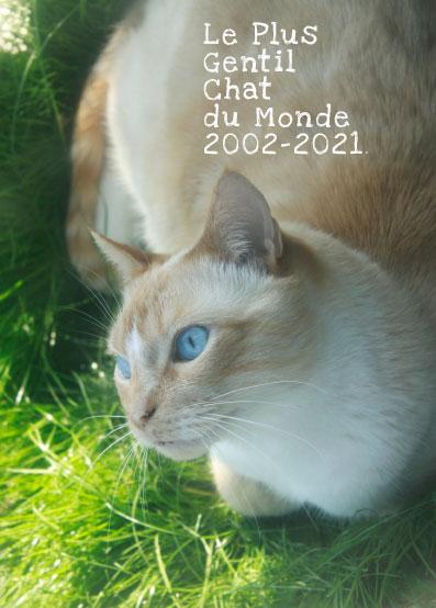 Le Plus Gentil Chat du Monde.