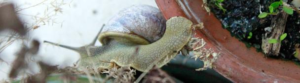 Robert l'escargot acrobate
