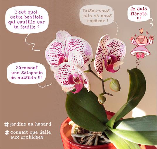 #Jardinière nulle, orchidée fleurie