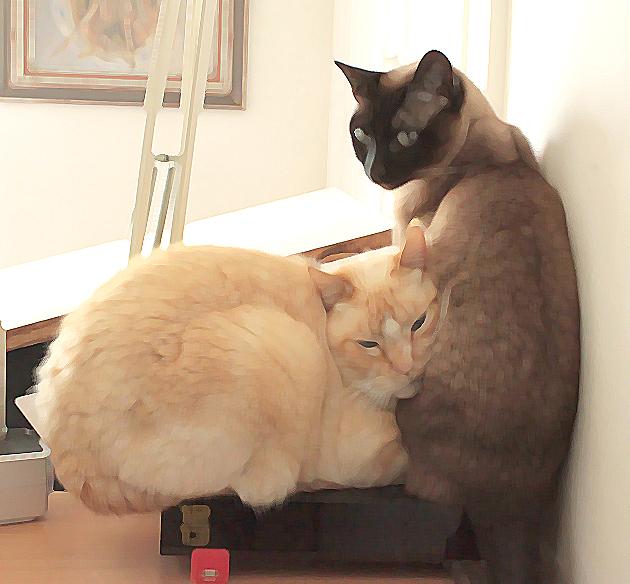 Les chats et la freebox