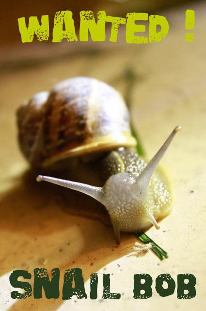 Snail Bob is missing